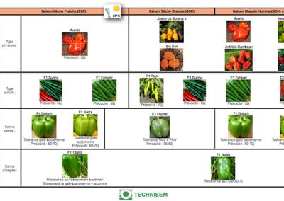 bf1_variety-calendar-piment-poivron