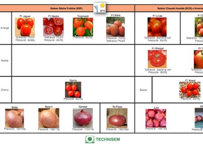 bf1_variety-calendar-tomato-onion